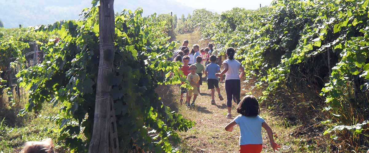 children in the vines
